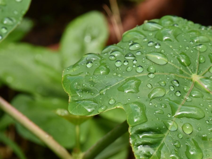 葉っぱと雨